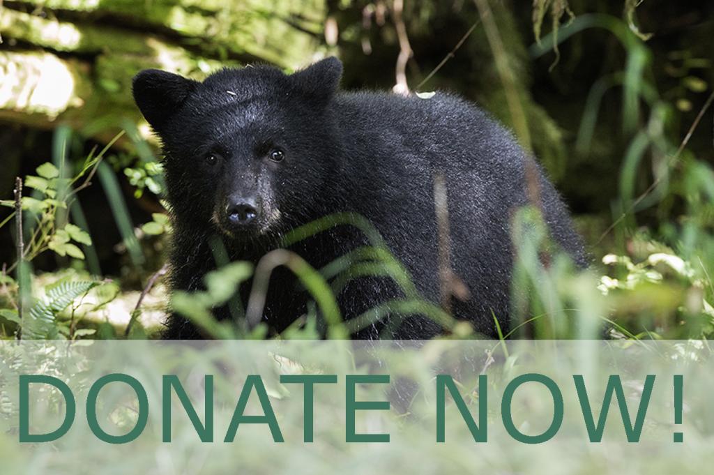 Black bear donate now1