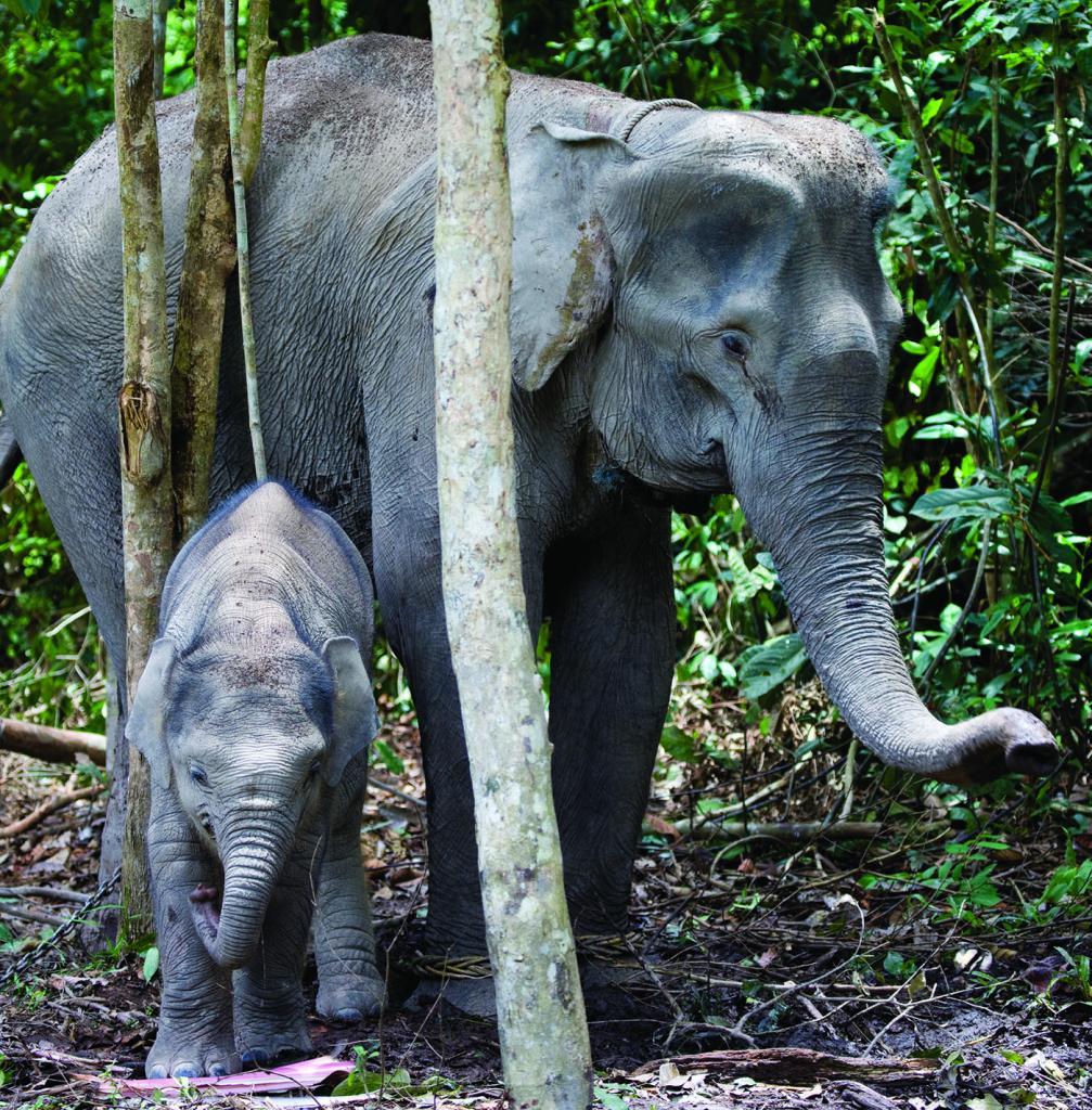 Training Facility for Sumatran Elephants