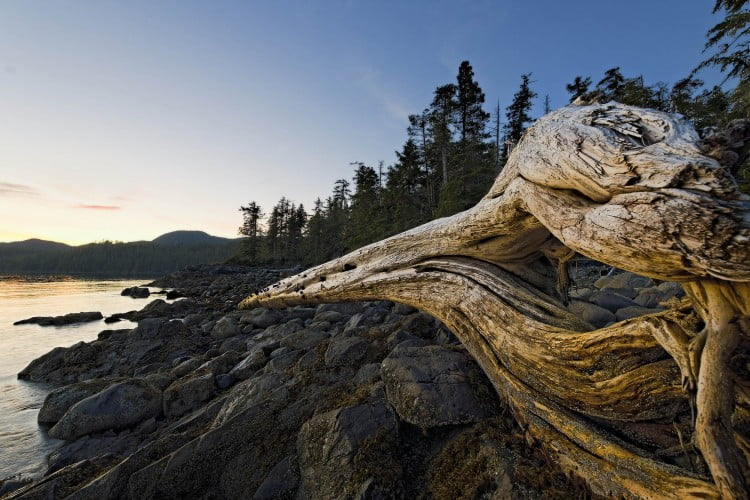 Whale-point-drift-wood-log_ASWright