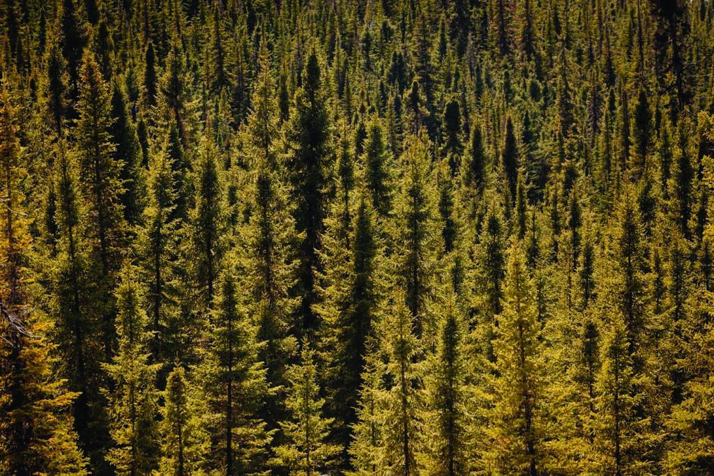Aerial view over forest. Luftaufnahme ueber Waldgebiet.